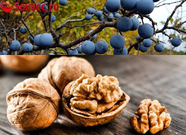 Грецкие орехи с терном