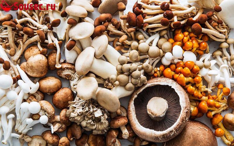 Виды грибов для соусов